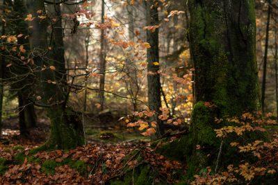 Magischer Herbst
