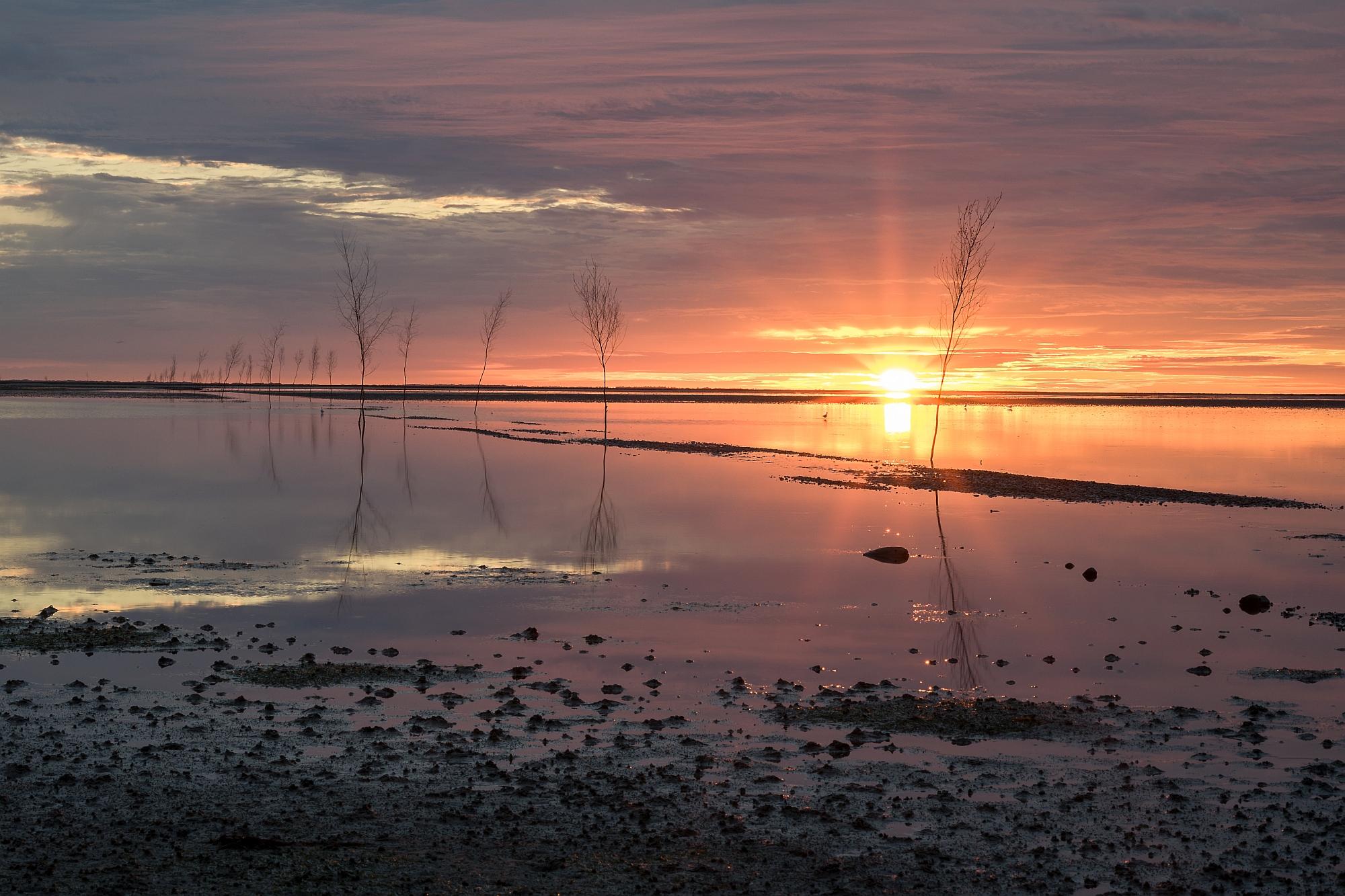 Mandø Ebbevej