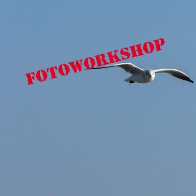 Fotoworkshop Hallig Hooge